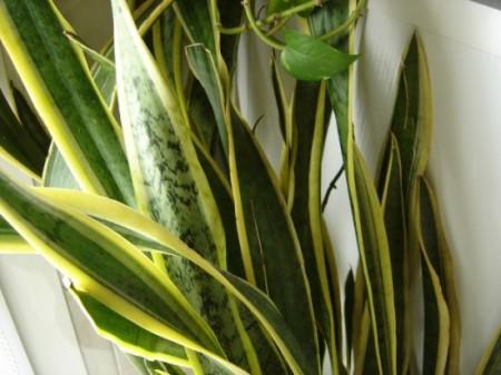 Trồng cây trong nhà – vừa đẹp vừa tiện ích 1