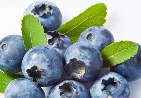 Quả việt quất (blueberry) 1