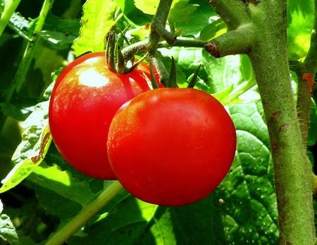 Quả cà chua còn có nhiều công dụng trong y học