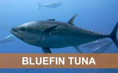 Cá ngừ chứa hàm lượng cao omega3