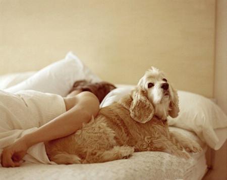 Ngủ cùng thú cưng là một thói quen không tốt, có thể ảnh hưởng xấu đến sức khỏe