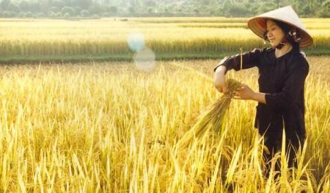 Quanh năm vất vả bên ruộng đồng, nhưng bố mẹ đã cho tôi cơ hội thay đổi cuộc đời