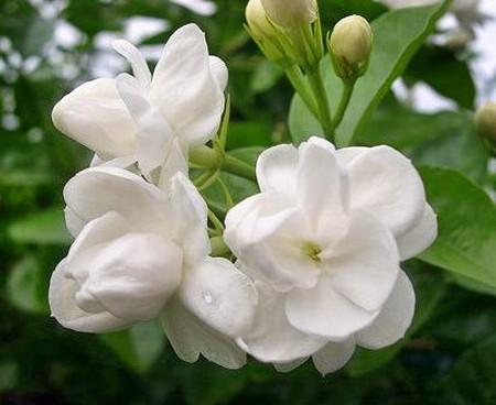 Mùi hương của các loại hoa sẽ khiến bạn có cảm giác hạnh phúc hơn.