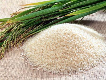 Gạo nếp có tác dụng chữa được rất nhiều bệnh.