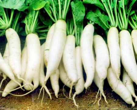 Củ cải: Giải nhiệt, tiêu viêm 1