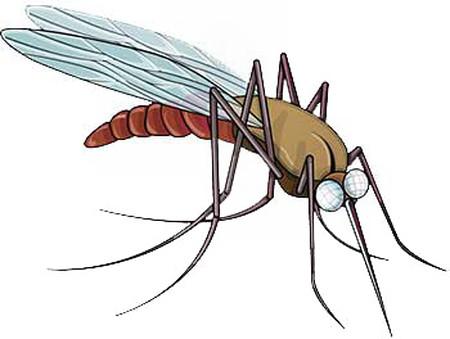 Khi bị côn trùng tấn công cần xử trí ngay.
