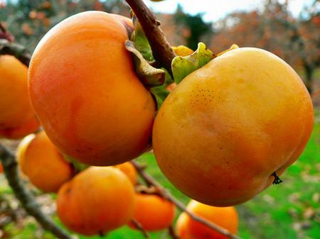 Hồng là một loại quả được rất nhiều người ưa thích.
