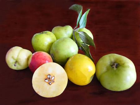 Táo là loại quả có thể hỗ trợ giảm cân nhờ việc làm giảm cảm giác thèm ăn