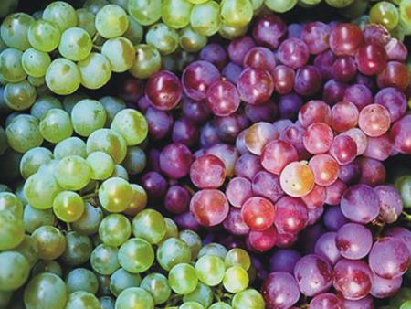 Nho là loại trái cây rất tốt cho sức khỏe của bạn.