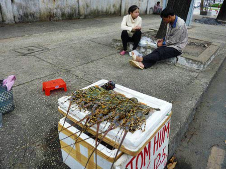 Tôm hùm được bán tràn lan trên đường với giá rất rẻ.