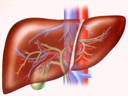 Những lưu ý với người bệnh viêm gan B 1