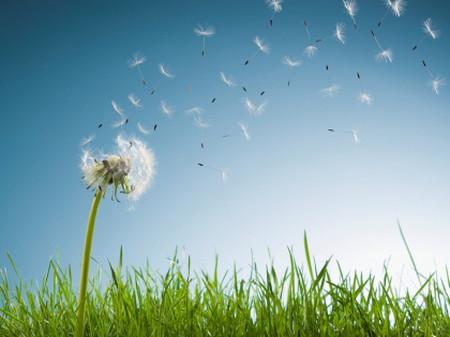 Môi trường không khí tốt giúp cả nhà khỏe mạnh.