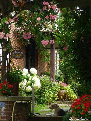 Trồng hoa hồng ở cổng và lối vào nhà 1