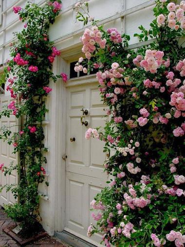 Trồng hoa hồng ở phía trước cửa 2