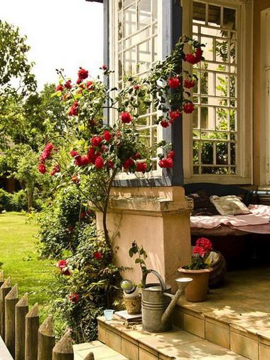 Trồng hoa hồng ở phía trước cửa 3