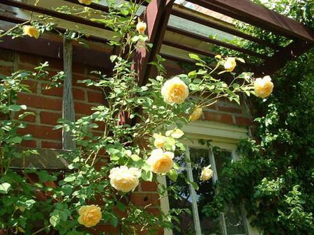 Hoa hồng trang trí nơi thư giãn 1