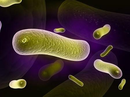Probiotic có lợi cho hệ tiêu hóa.