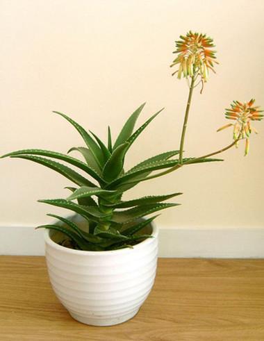 Những loại cây bạn nên trồng trong nhà của mình - Không Gian Sống - Phong thủy nhà ở - Sức khỏe gia đình