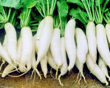 8. Nước củ cải trắng 1