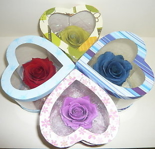 Hoa hồng bất tử 1