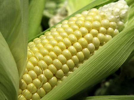Ngô còn được coi là một nguồn dinh dưỡng phong phú cho cơ thể.