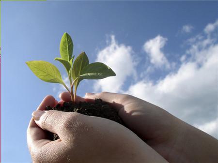 Hạnh phúc cũng như mầm non, muốn cây non phát tiển thì phải có sự chăm sóc chu đáo.