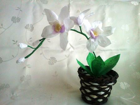 Làm hoa lan giấy thật đẹp và độc đáo 1