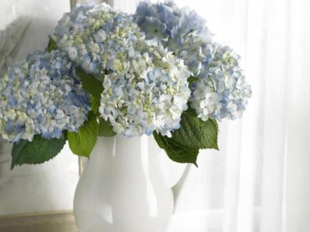 1. Cách cắm hoa cẩm tú cầu theo phong cách cổ điển 1