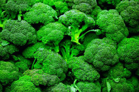 A Forest of Broccoli Heads