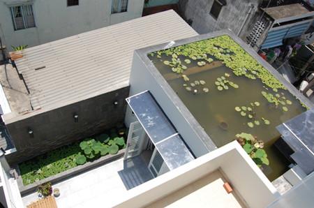Kiến trúc sư Xuân Hải đã áp dụng giải pháp này cho một ngôi nhà ở TP HCM với hồ nước trên sân thượng, trồng hoa súng và lục bình. Đây là một trong những giải pháp giảm nhiệt tự nhiên hiệu quả khi thời tiết nắng nóng.