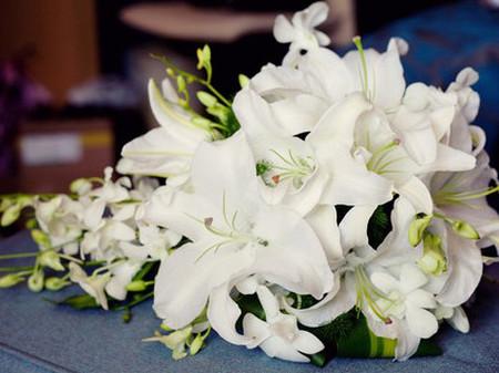 Hoa bách hợp - Thuần khiết 1