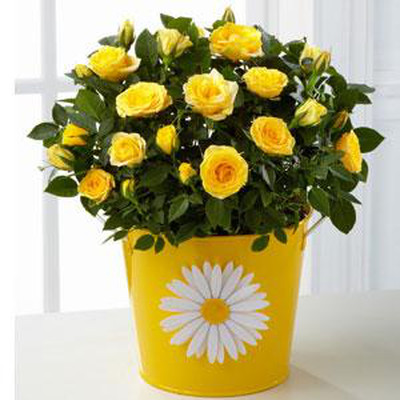 Tinh khôi với bình hoa màu trắng. Rực rỡ với bình hoa màu vàng 4