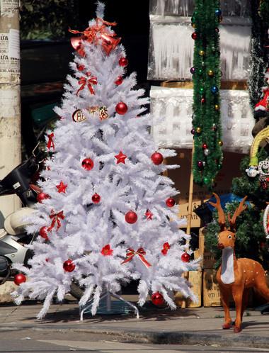 Chọn cây thông trang trí đón mừng Giáng sinh 14