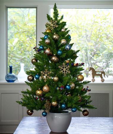 Chọn cây thông trang trí đón mừng Giáng sinh 4