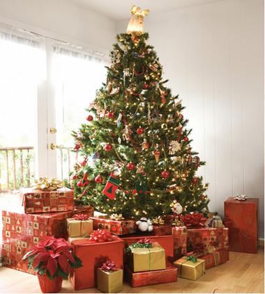 Chọn cây thông trang trí đón mừng Giáng sinh 5