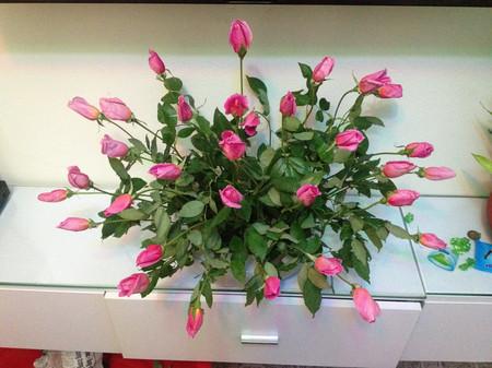 Không gian nhà bạn thêm lãng mạn với hoa Hồng leo 1