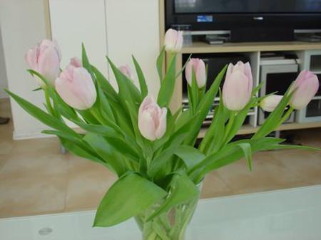 Ý nghĩa và những cách cắm đơn giản của loài hoa tuylip 5