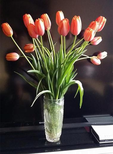 Ý nghĩa và những cách cắm đơn giản của loài hoa tuylip 8